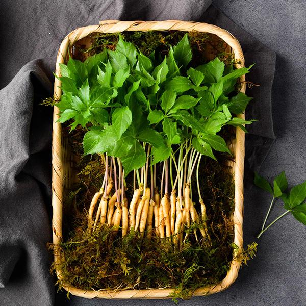 [전남장성]문영철 농부가 직접 보내는 새싹삼 50뿌리